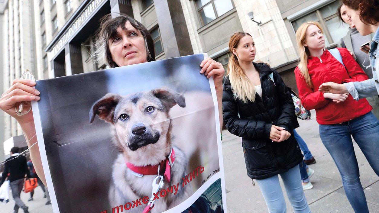 Новый закон по содержанию домашних животных
